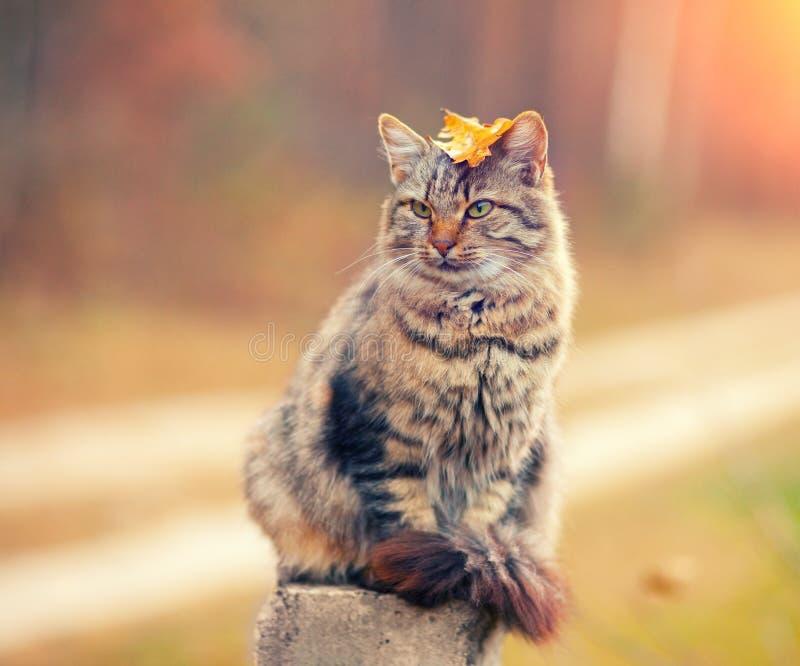 Download 12 Kotów Kuzia O Portret Senior Y Obraz Stock - Obraz złożonej z portret, kiciunia: 53780581