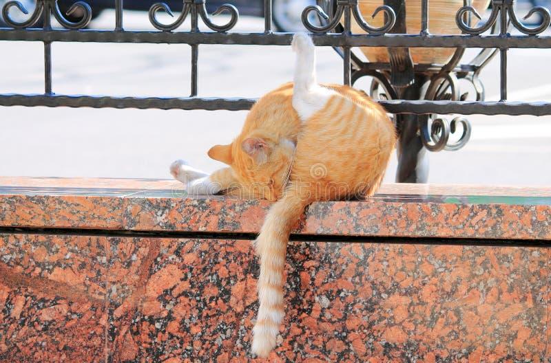 Kotów obmycia zdjęcie royalty free