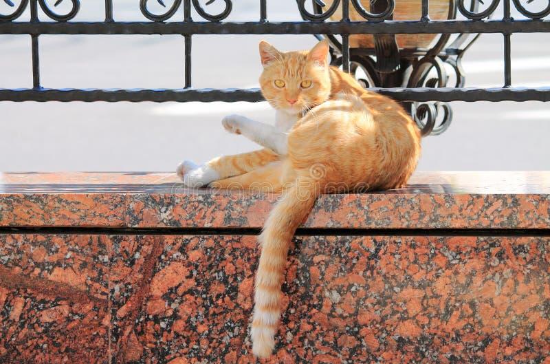 Kotów obmycia obrazy stock