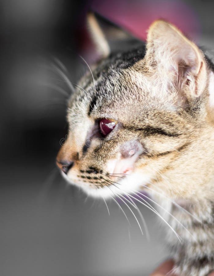 Kotów oczu czerwieni krwionośne rany obraz stock