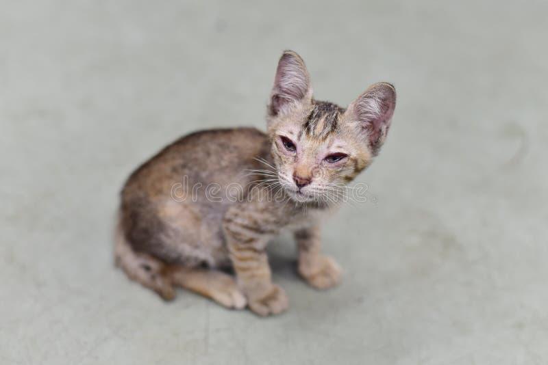 Kotów oczu infekcja dla takecare zdjęcia stock