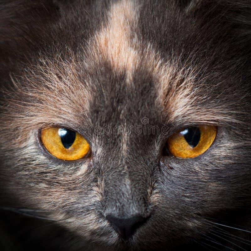 Kotów oczy. obraz stock