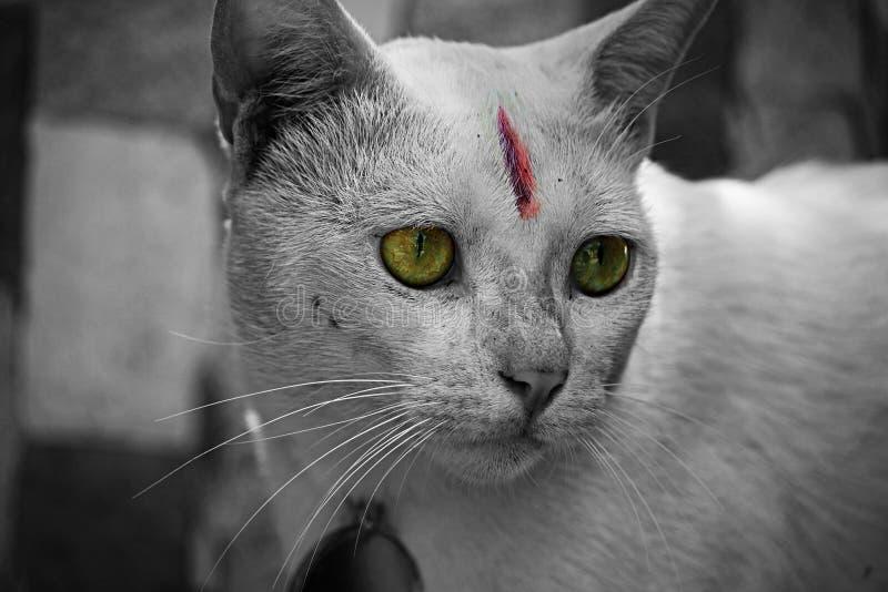 Kotów oczy obraz stock