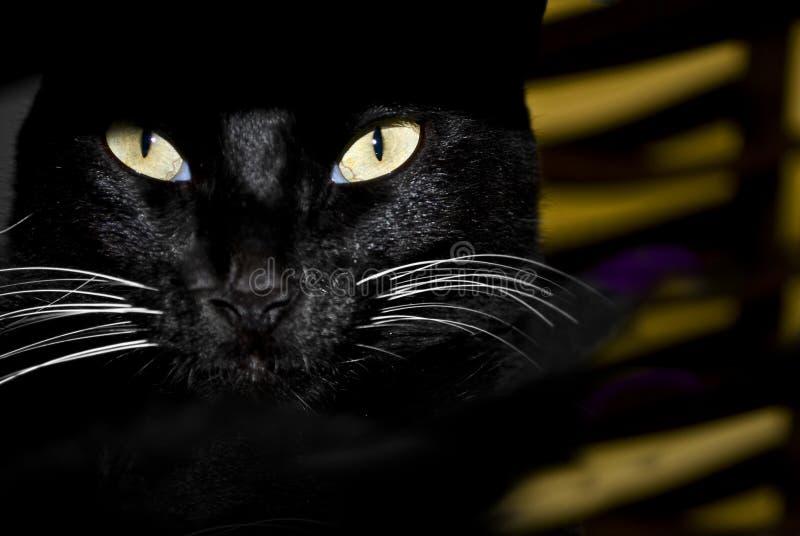 kotów oczy obrazy stock