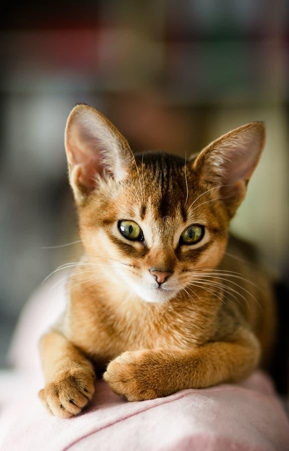 kotów potomstwa obraz royalty free