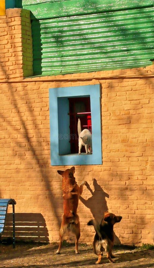 kotów psy obrazy royalty free