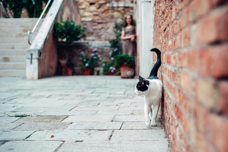 Kotów spacery w wygodnym starym podwórzu obraz royalty free