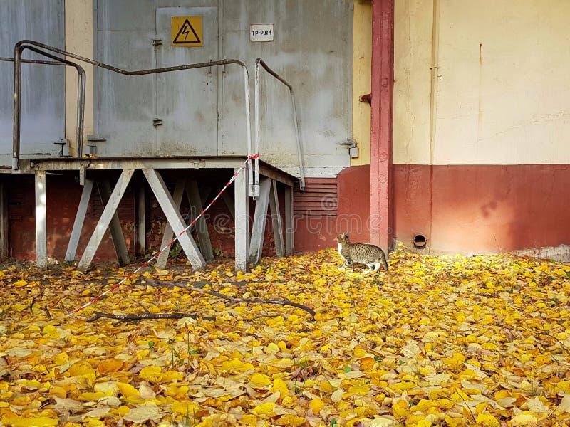 Kotów spojrzenia przy drzwi z znakiem ostrzegawczym zdjęcia royalty free