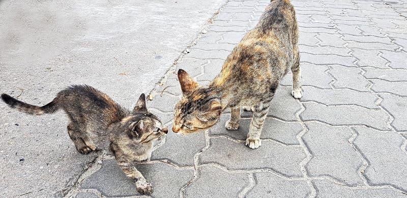 2 kotów sztuka z each inny zdjęcia royalty free