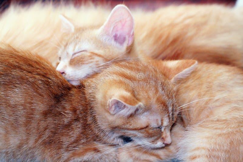 kotów target785_1_ obraz royalty free
