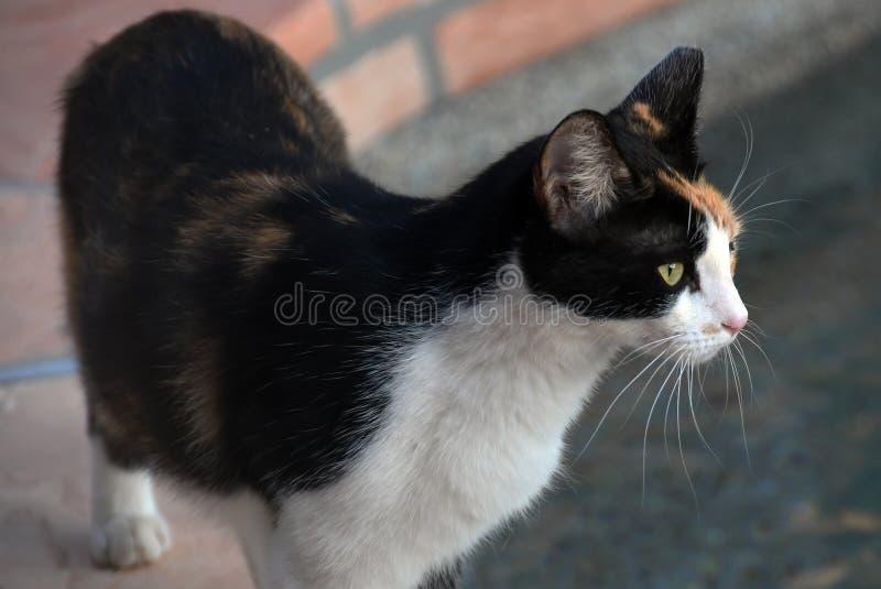 Kot & x22; Ładny Girl& x22; obrazy stock