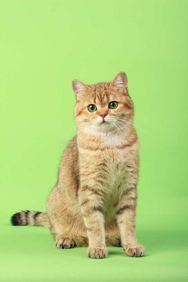 kot śliczny zdjęcie royalty free