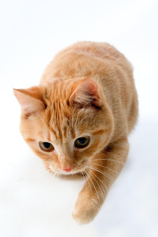 kot śliczny fotografia royalty free