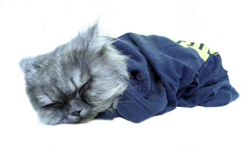 kot śpi zdjęcia stock