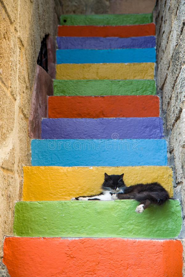 Kot śpi na kolorowych krokach zdjęcia stock