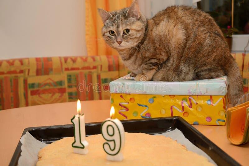 Kot świętuje prezenty urodzinowych dla kota obraz stock