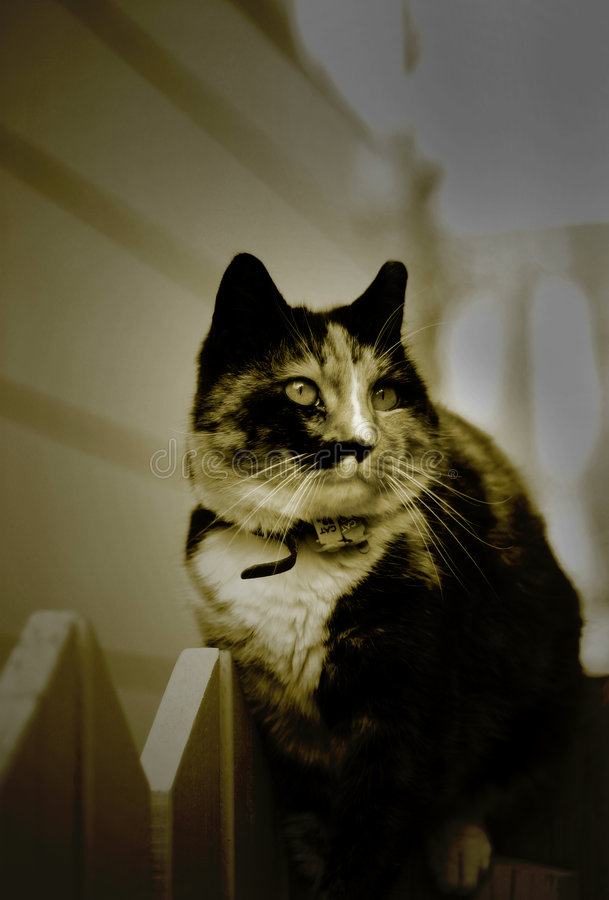 Download Kot zdjęcie stock. Obraz złożonej z koncern, zwierzę, kiciunia - 139668