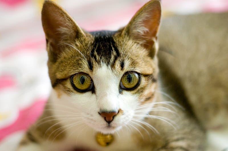 Download Kot obraz stock. Obraz złożonej z zwierzę, pets, zwierzęta - 4352235
