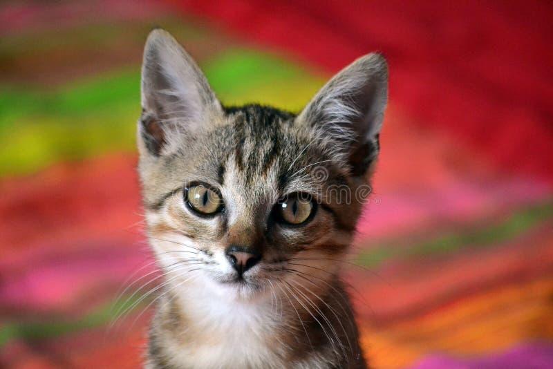 Download Kot zdjęcie stock. Obraz złożonej z zwierzęta, koty, dopatrywanie - 57670082