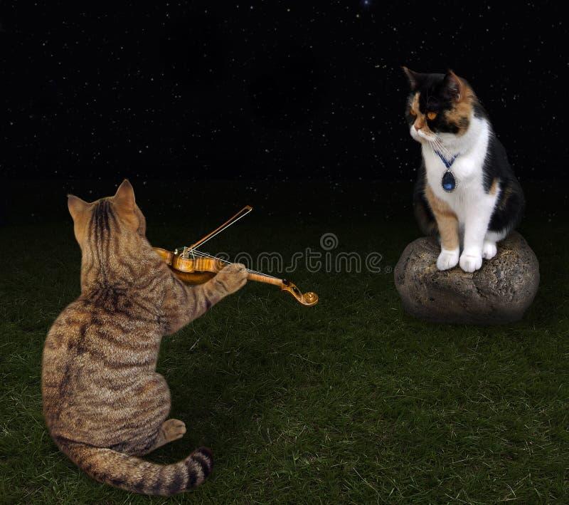 Kot bawić się skrzypce dla swój kochanka zdjęcie royalty free