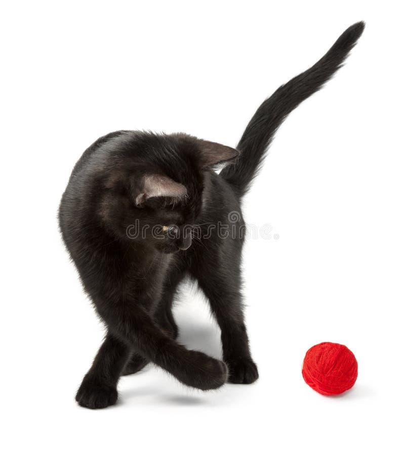 Kot bawić się z czerwonym gejtawem obraz royalty free