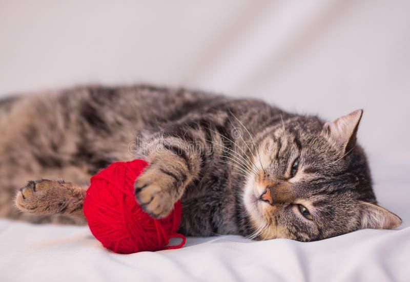 Kot bawić się z piłką czerwona przędza zdjęcie royalty free