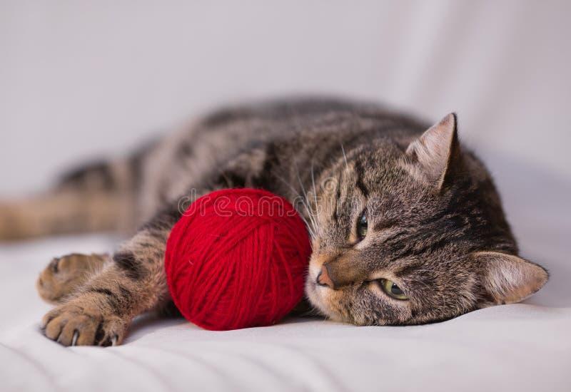 Kot bawić się z piłką czerwona przędza zdjęcia royalty free