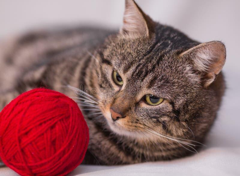 Kot bawić się z piłką czerwona przędza zdjęcia stock