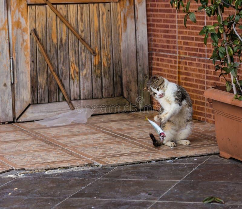 Kot bawić się z rybą przed jeść je Istanbuł, Turcja obrazy stock