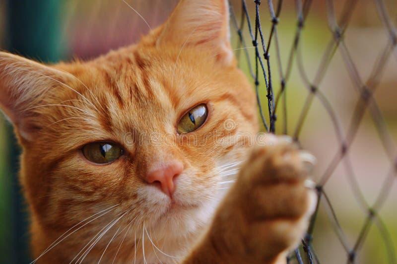 Kot, bokobrody, twarz, fauna zdjęcia stock