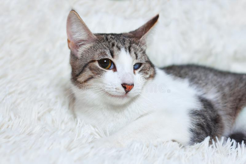 Kot choroba ratująca od miasto ulic, raniący, spojrzenia z nieufnością, strach Światowi dni zwierzęta domowe, pojęcia dla schroni fotografia stock