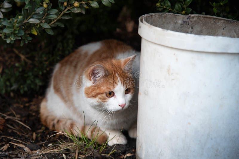 Kot chuje za polowaniem dla myszy i wiadrem obraz royalty free