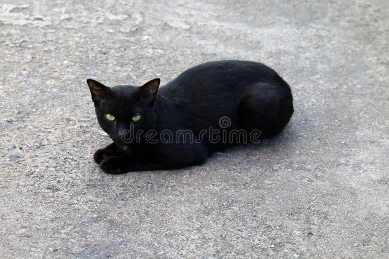 Kot, Czarnego kota charłaczy brzydki na podłoga obraz stock