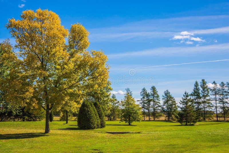 kot dzień obserwuje siedzi ciepłego pogodnego drzewa obrazy stock
