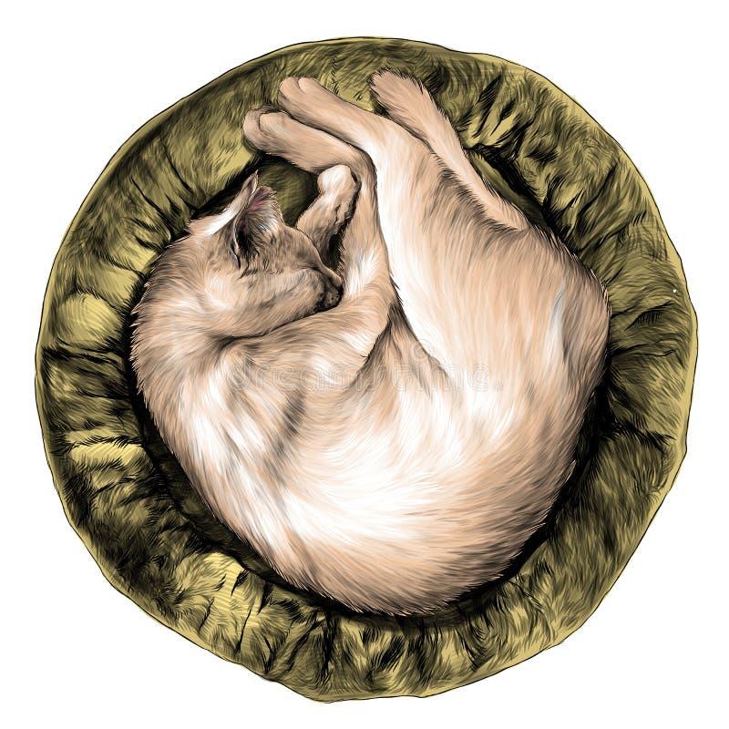 Kot fryzował w górę dosypiania w round kota ściółce, odgórny widok, ilustracja wektor