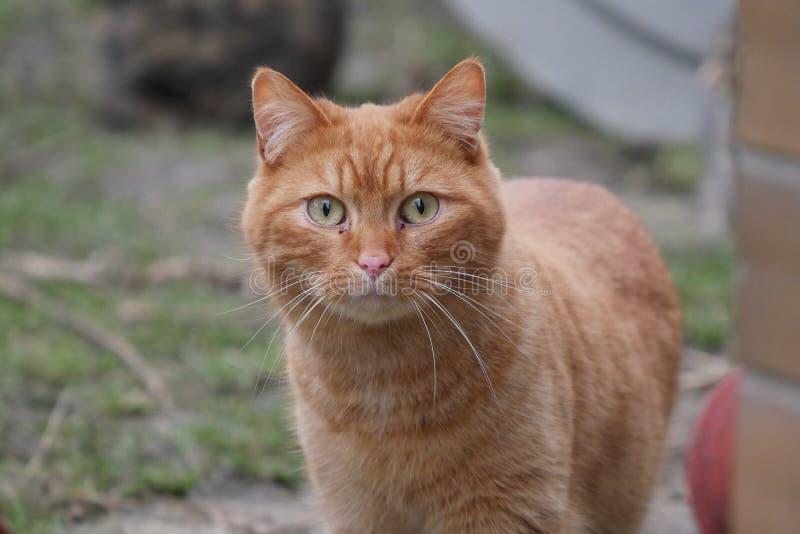 Kot głowy szczegół obrazy royalty free