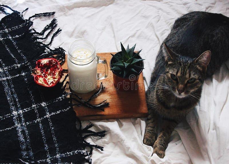 Kot i chłód zdjęcie royalty free