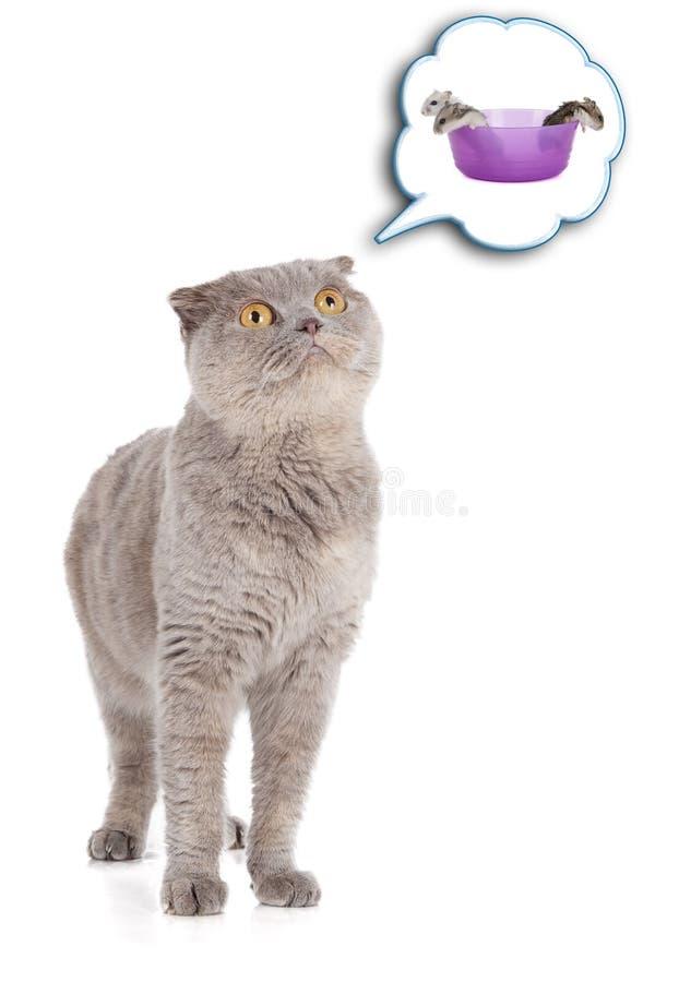 Kot i chomik zdjęcia stock