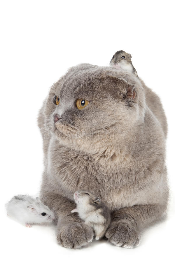 Kot i chomik obraz stock