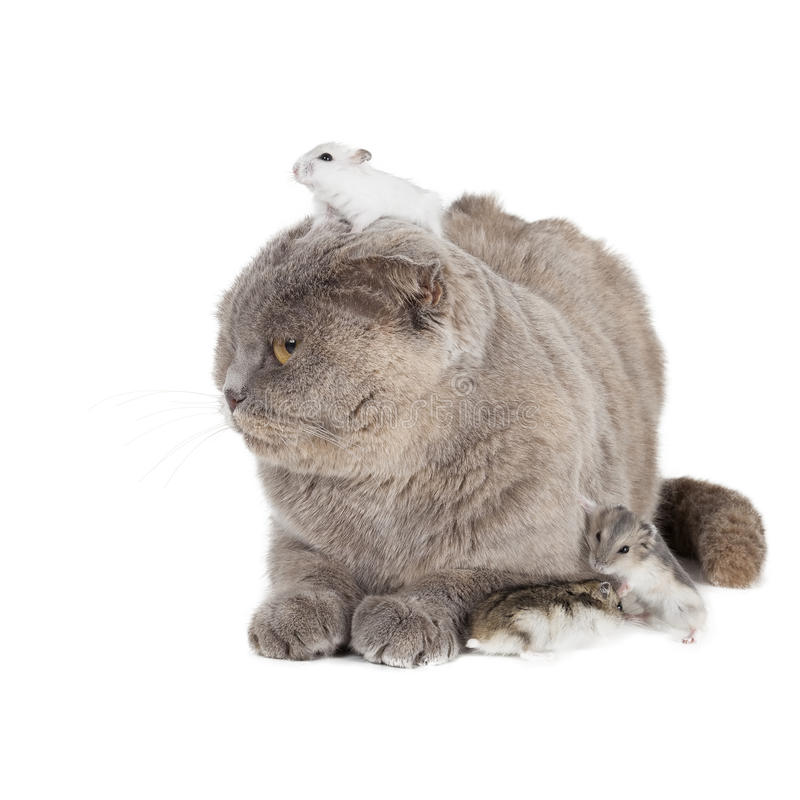 Kot i chomik zdjęcie stock