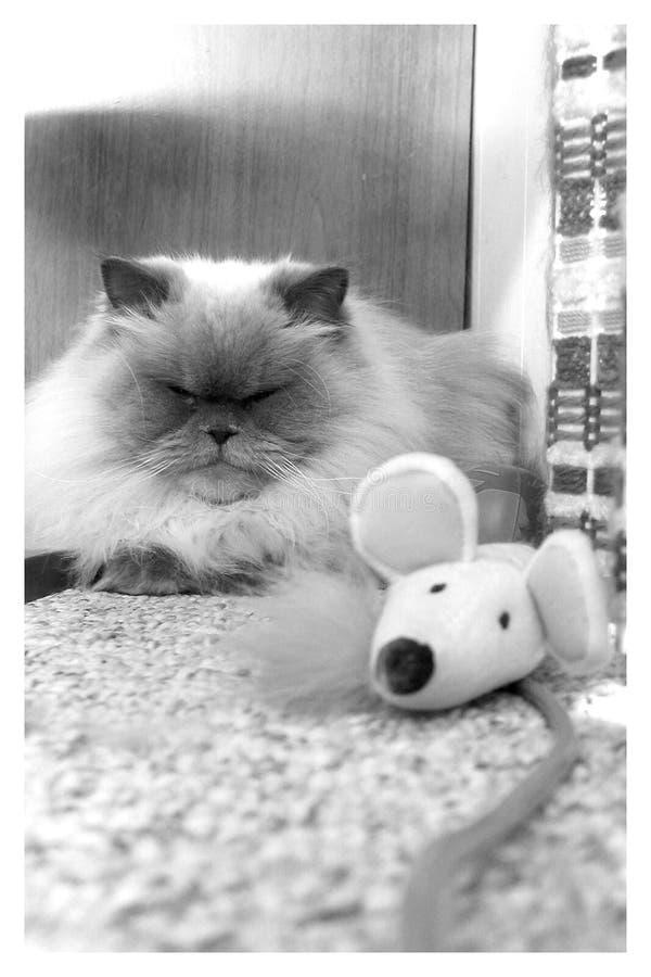 Kot i mysz zdjęcie stock