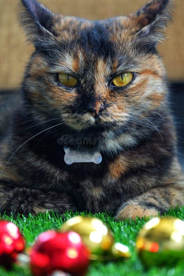 Kot i piłka obrazy stock