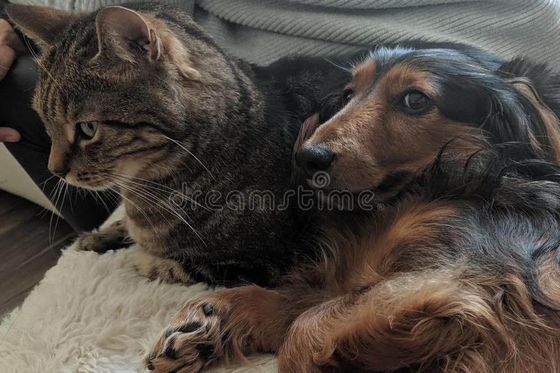 Kot i pies jako przyjaciele zdjęcia stock