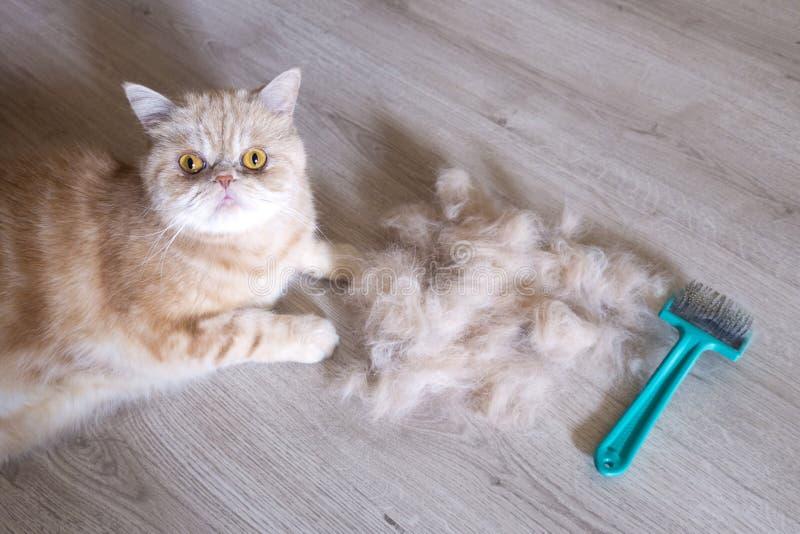 kot i rozczesany włosy fotografia stock
