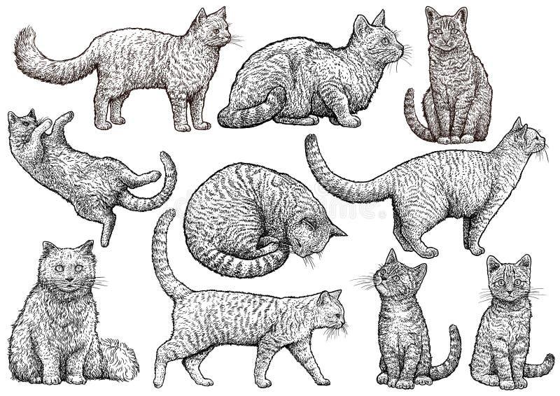 Kot inkasowa ilustracja, rysunek, rytownictwo, atrament, kreskowa sztuka, wektor zdjęcie royalty free