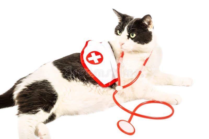 Kot jak lekarka zdjęcie royalty free