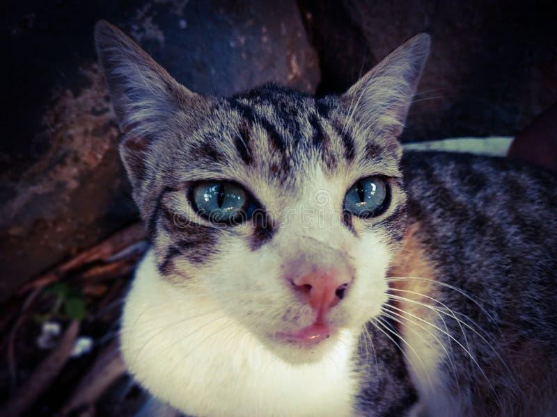 Kot jest bardzo sprytny lub niewinny. zdjęcia stock