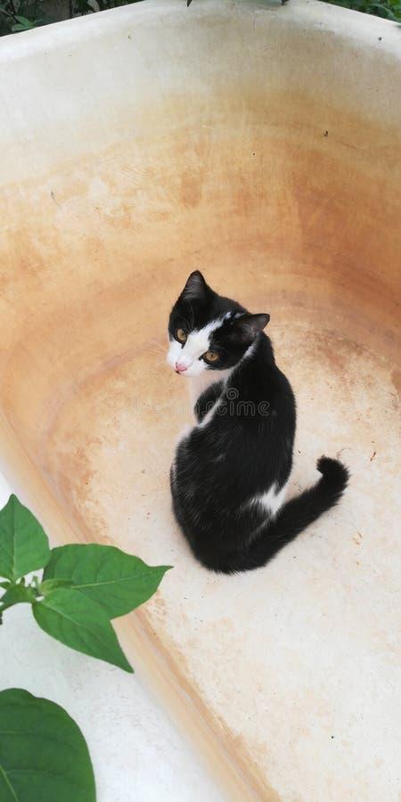 Kot jest drapieżnikiem łapiącym w ogródzie obraz royalty free