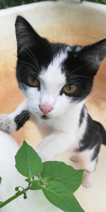 Kot jest drapieżnikiem pozuje w ogródzie zdjęcia royalty free