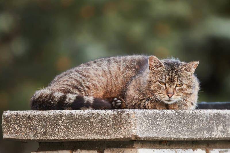 Kot jest gnuśny zdjęcia royalty free